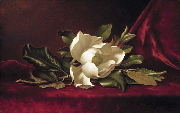 The Magnolia Blossom, 1888 (oil on canvas)