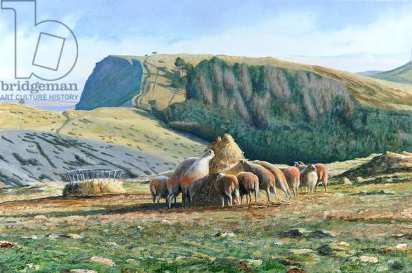Sheep Feeding, 2004 (oil on canvas)