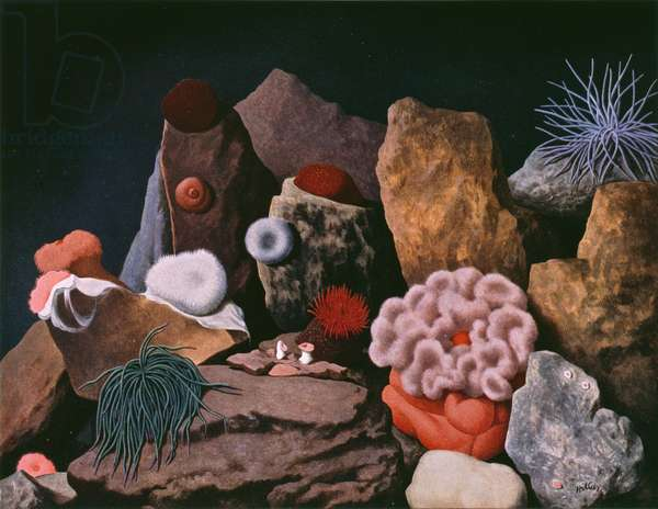 """Sea-anemones"" July, Shell Calendar 1957, (oil on canvas)"