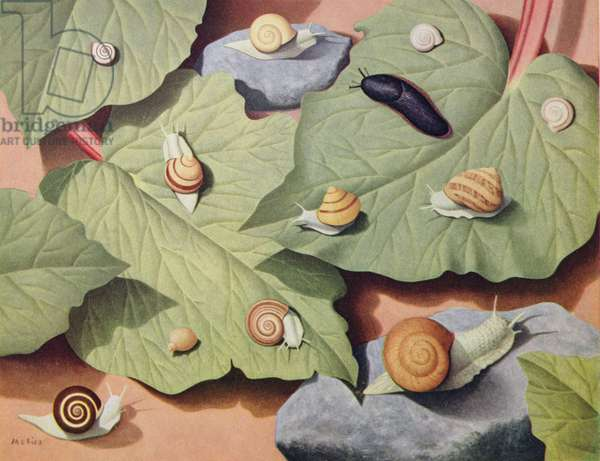 """Snails and Slugs"" December, Shell Calendar 1957, (oil on canvas)"