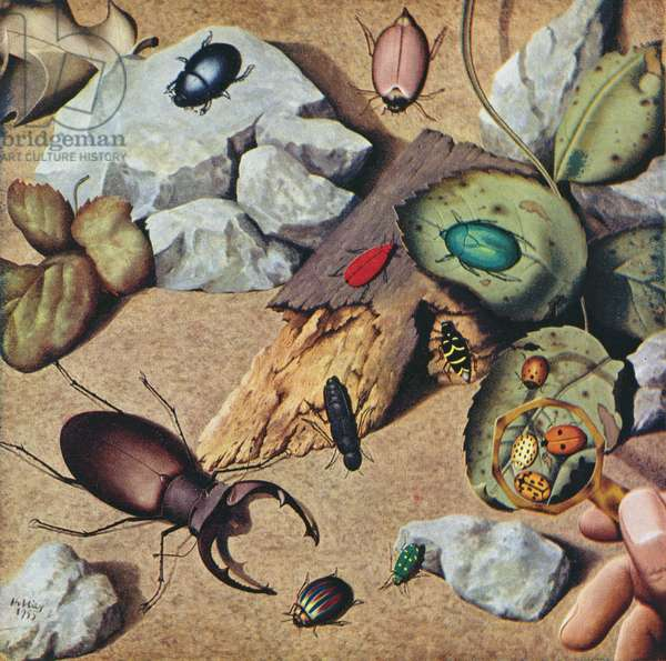 """Beetles"" March, Shell Calendar 1957, 1955 (colour litho)"