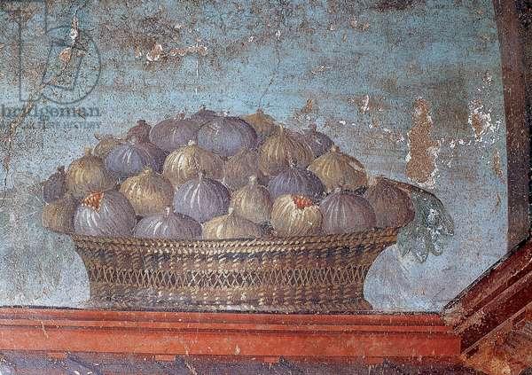 Roman art. Italy. Fresco. Basket of figs. 1st century AD. Oplontis. Campania. Italy.