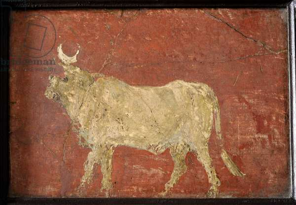The Apis Bull with the crescent moon between its horns, 40-50 AD, Pompeii, Italy