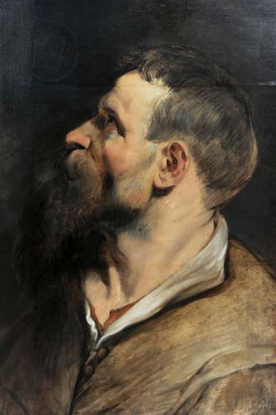 Study of a Man in Profile, 1611-1612, by Peter Paul Rubens (1577-1640).