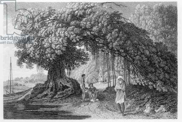 A Banyan Tree, from 'Travels in India in in the Years 1780-83' by William Hodges, engraved by Benjamin Pouncy (fl.1772-99) published 1792 (engraving) (b/w photo)