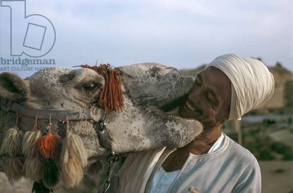 Camel Kiss (photo)