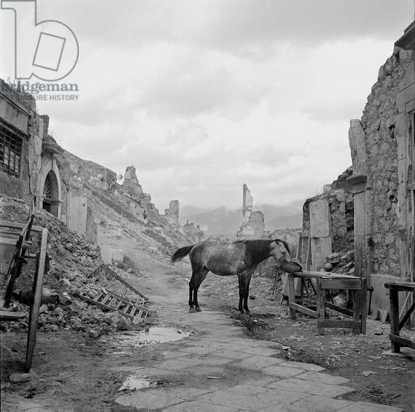 A lone horse is fed oats near the entrance to the cathedral, Cassino, Italy, May, 1947 (b/w photo)