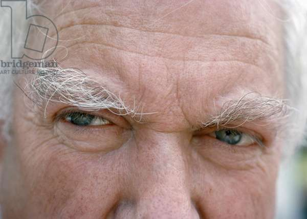 Calder's Eyes (photo)