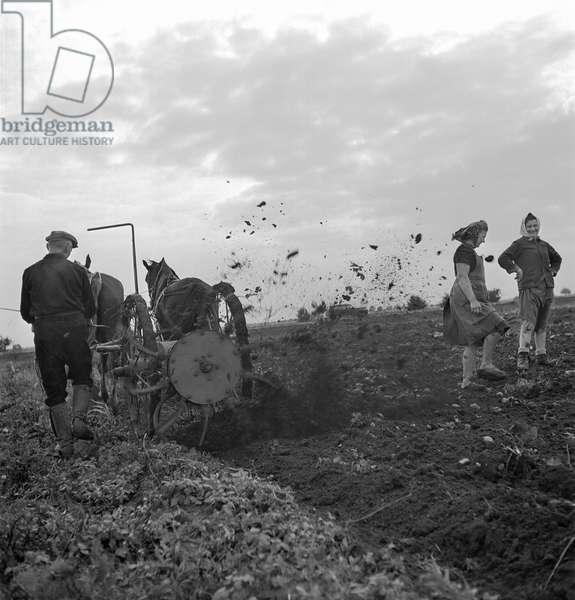 German farmers working ploughing a field, 1948 (b/w photo)