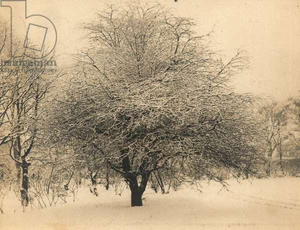 White Christmas (b/w photo)