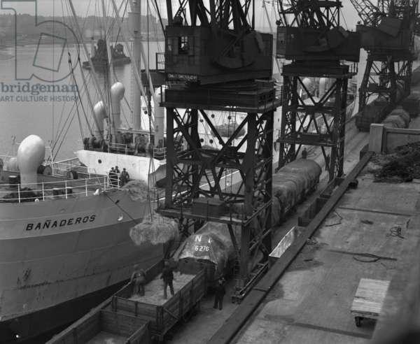 Unloading esparto grass at the Corporation Quay, Sunderland, UK, 1948 (b/w photo)