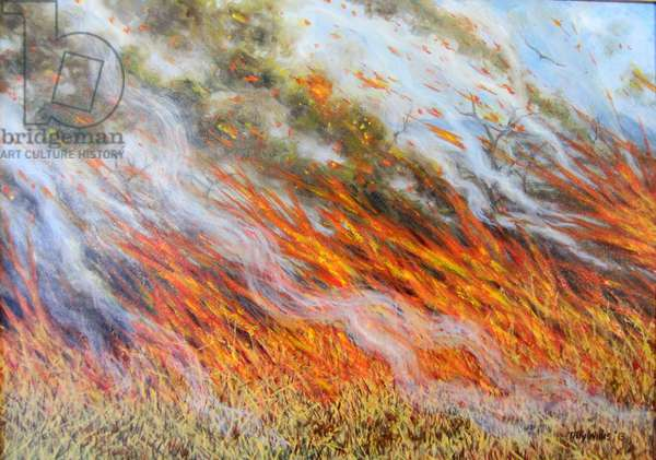 Bushfire Inferno, 2014, (oil on canvas)