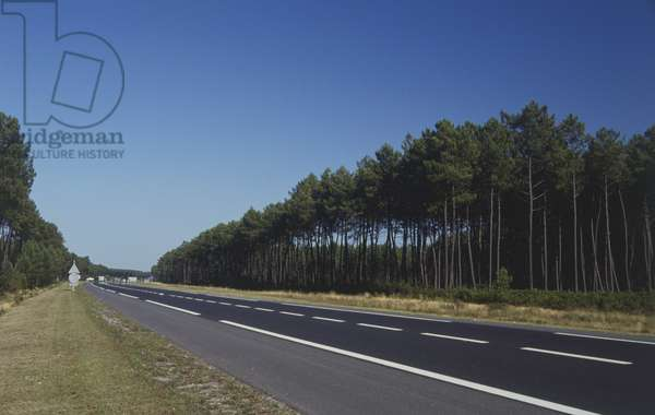 France, Gironde-Landes, Landes forest, road through pine trees