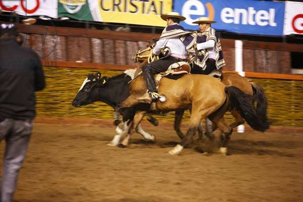 Chilean Rodeo (photo)