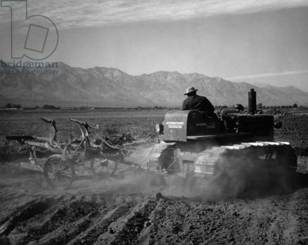 Benji Iguchi driving tractor in field, Manzanar Relocation Center, California, 1943 (photo)