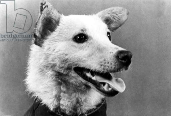 Belka (In Pic), Was One the Two Russian Dogs that Went Into Orbit Aboard Sputnik Spaceship and Returned Safe and Sound from a Space Flight, 1960.