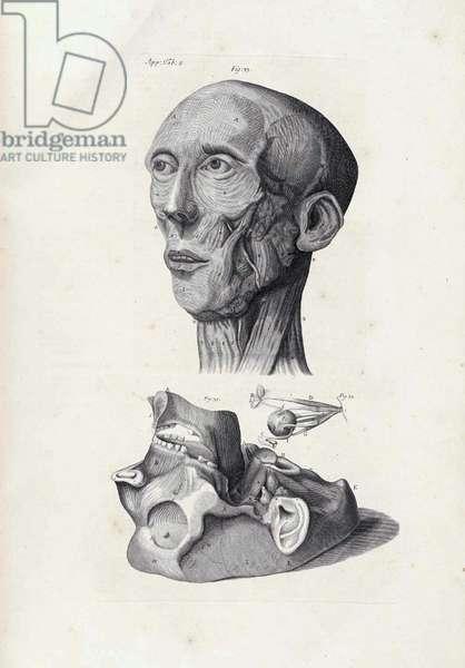 The Anatomy of Humane Bodies