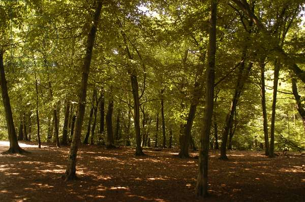Germany, Berlin, Grunewald, the largest forest within the city limits