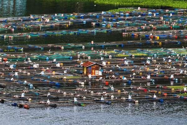 Fish farms on Lake Toba, as seen from Siuhan, North Sumatra, Indonesia (photo)