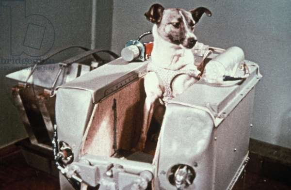 Laika, the First Dog in Space, in the Sputnik 2 Capsule.