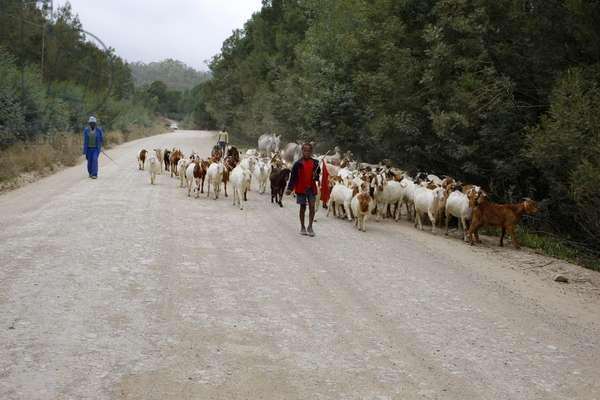 Shepherd and Flock (photo)