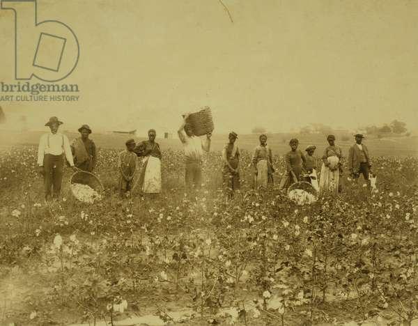Land of cotton 1900 (photo)