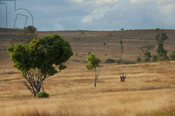 Soamadio, Fianarantsoa Province, Madagascar (photo)