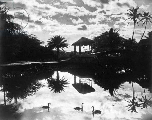 A Tranquil Scene In Hawaii, Hawaii, c.1930  (b/w photo)