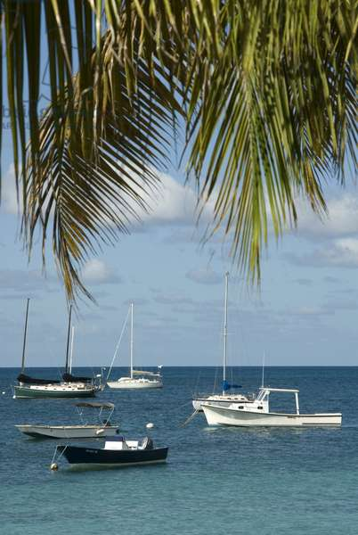 Puerto Rico, Vieques Island, Esperanza Bay, boats moored in the sea, with leaves from a palm tree in the foreground
