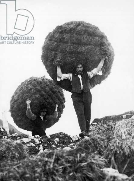 Transporting Hay By Hand, 1927 (b/w photo)
