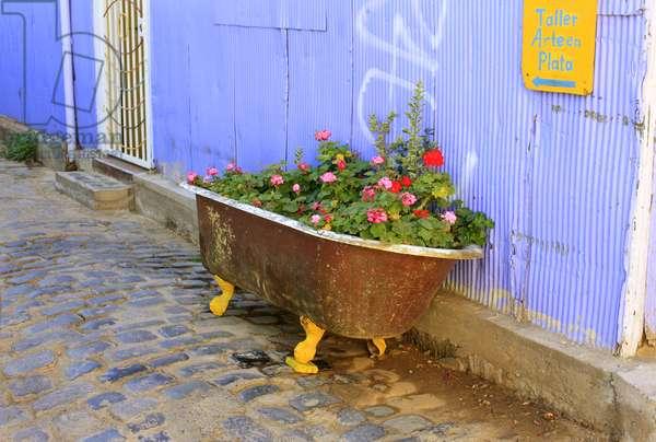 Old bath Flowerbed in Valparaiso (photo)