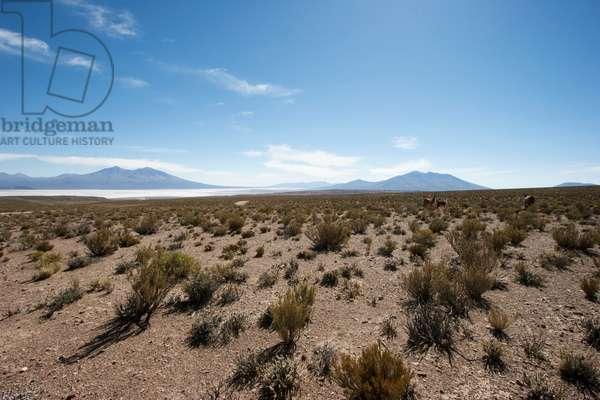 Salar De Chiguana And Volcanoes Of The Andes Cordillera (photo)