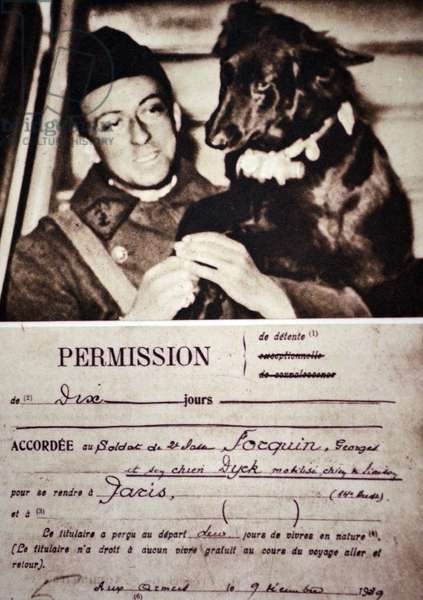 World War Two: French army messenger dog at a front line position 1940