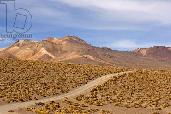 Atacama Desert Road (photo)