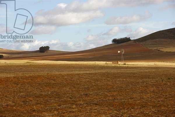 Cederberg Landscape (photo)