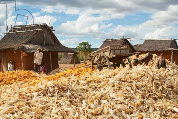 Family Separating Husks from Corn in Mahaboboka, Toliara Province, Madagascar (photo)