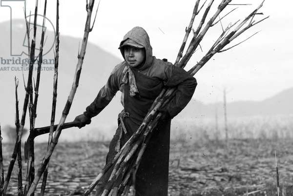 A Mexican boy working at a sugarcane plot, in Ahualulco, Jalisco, Mexico. March 31, 2007.  (photo)