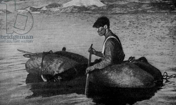 North America. Alaska. Dead seals used in the capture of live ones. 1920