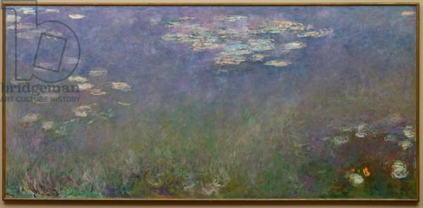 Water Lilies (Agapanthus), c.1915-26 (oil on canvas)
