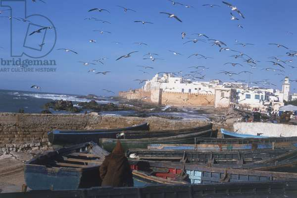 Morocco, Essaouira, seagulls in flight above fishing boats on rocky shore below ramparts on southern Atlantic coast