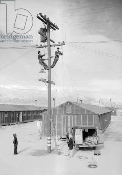 Line crew at work, Manzanar Japanese American Internment Camp, California, 1943 (b/w photo)