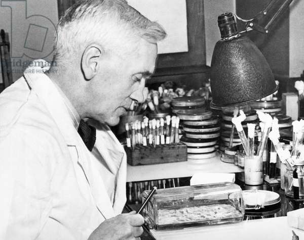 Professor Alexander Fleming, London, England, December 24, 1943 (b/w photo)
