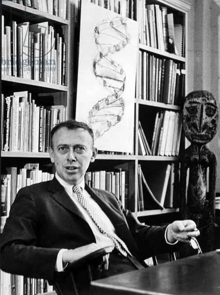 Dr. James Watson And DNA Helix, United States of America, c.1962 (b/w photo)