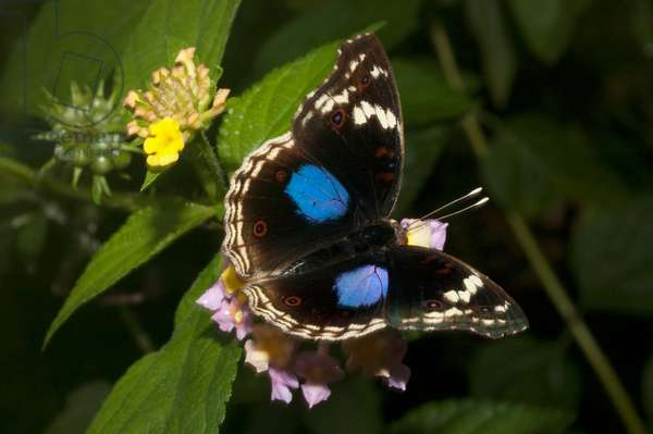 Butterfly (photo)