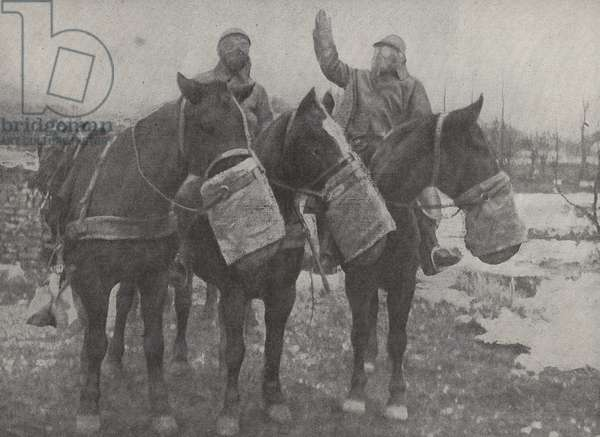 Gas masks for horses