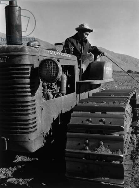 Benji Iguchi on tractor, Manzanar Relocation Center, California, 1943 (photo)