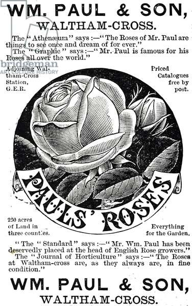 Advertisement for Paul's Roses, 19th century