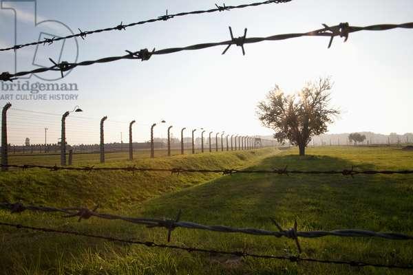 Barbed Wires and Tree, Auschwitz-Birkenau Concentration Camp, Oswiecim, Malopolska, Poland (photo)