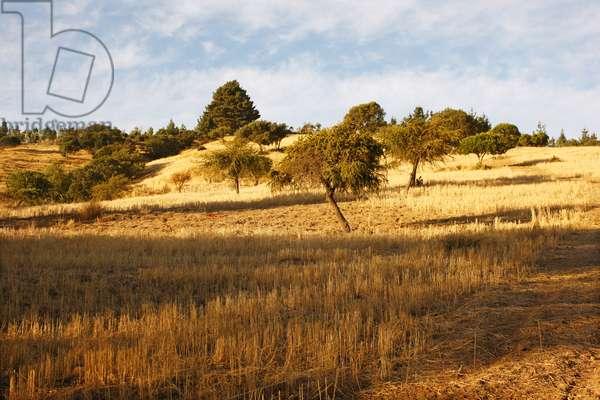 Field in Chile (photo)