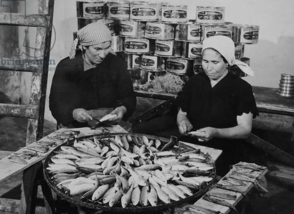 Greek fishing was revived under the Marshall plan in 1950.